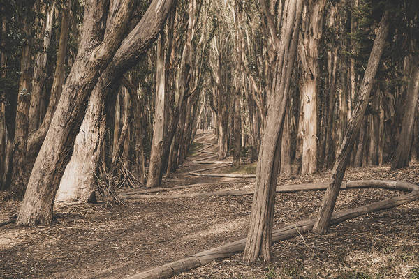 Photograph - The Wood Line by Lee Harland