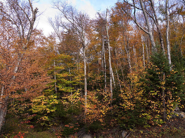 Photograph - The Woods Are Lovely by Brenda Kean