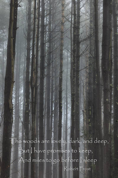 Photograph - The Woods by Bill Wakeley