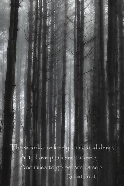 Photograph - The Woods Black And White by Bill Wakeley