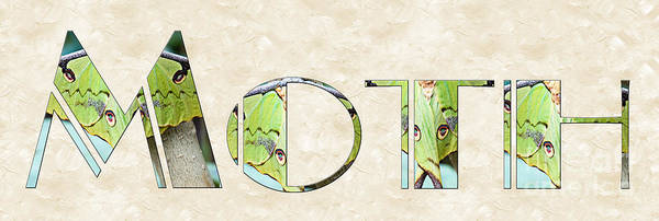 Photograph - The Word Is Moth by Andee Design