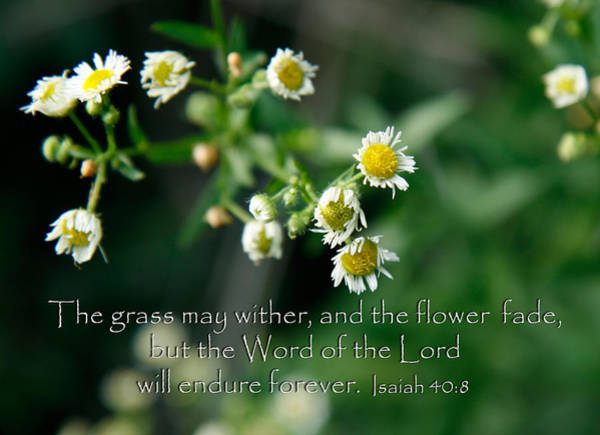 Photograph - The Word Of The Lord Will Endure by Denise Beverly