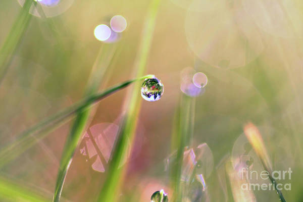 Refraction Wall Art - Photograph - The World In A Drop by Sylvia Cook