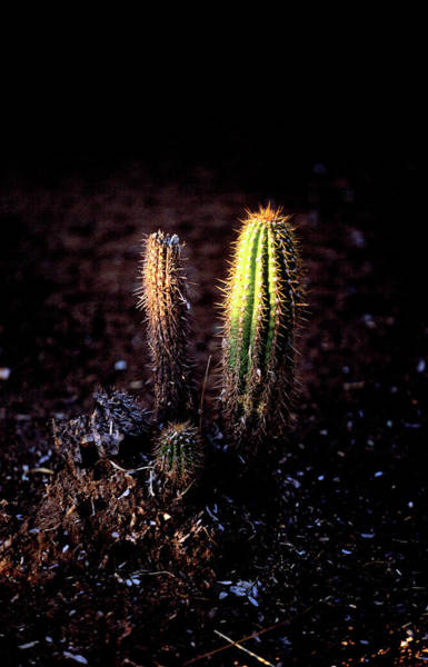 Wall Art - Photograph - The Worlds Most Recognizable Cactus by Todd Korol