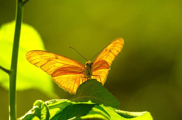 Little Things Photograph - Then A Butterfly by Jeff Swan