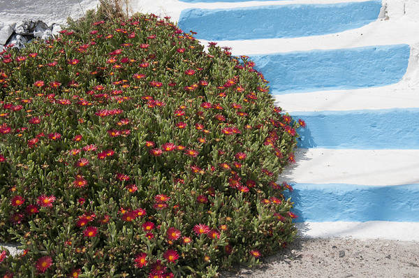 Photograph - Therasia Flowers And Steps by Brenda Kean