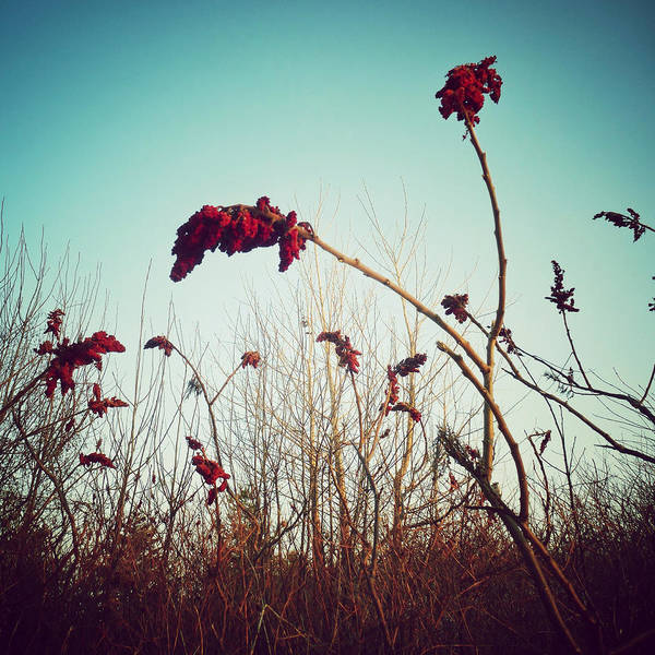 Photograph - There Are Always Flowers For Those Who Want To See Them by Natasha Marco