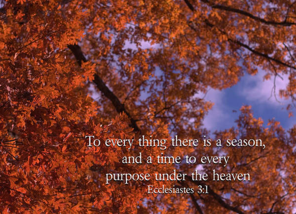 Photograph - There Is A Season Ecclesiastes by Denise Beverly