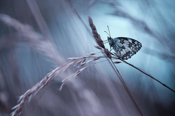 Wall Art - Photograph - There Is No End To Love by Fabien Bravin