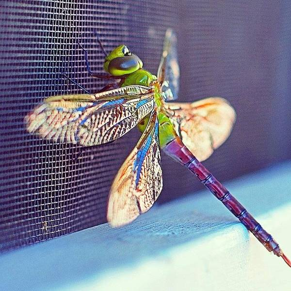 Green Photograph - There Is Nothing Common About The Wing by Heidi Hermes
