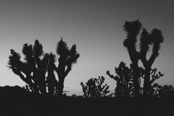 Joshua Tree National Park Wall Art - Photograph - They Come Out At Night by Laurie Search