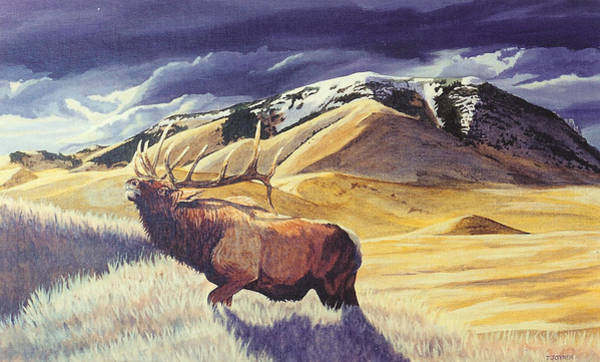 Theyre Bugling On West Butte Art Print