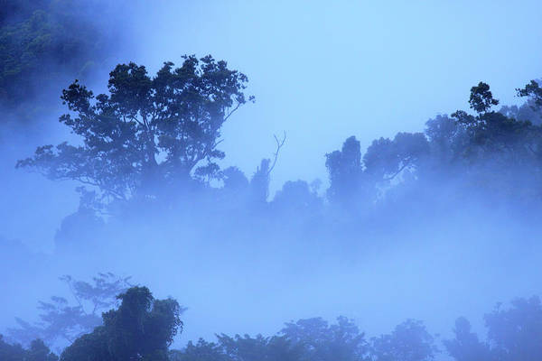 Far North Queensland Wall Art - Photograph - Thick, Tropical Rainforest Covered by Paul Dymond