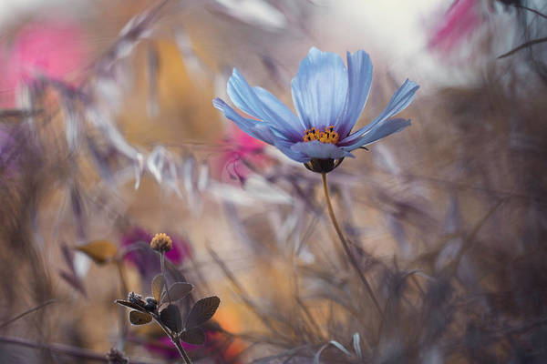 Blue Flower Photograph - Things That Flowers Tell by Fabien Bravin