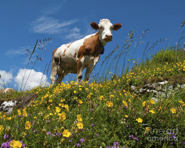 Photograph - Think Milk by Edmund Nagele