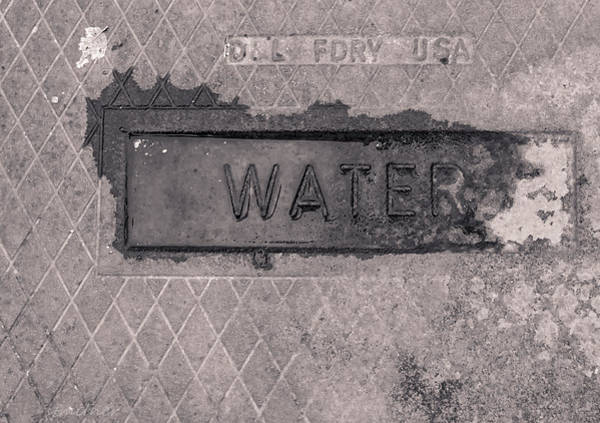 Photograph - Thirst  by Steven Milner