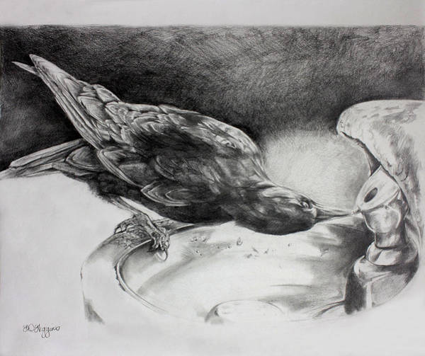 Raven Drawing - Thirsty Crow by Derrick Higgins