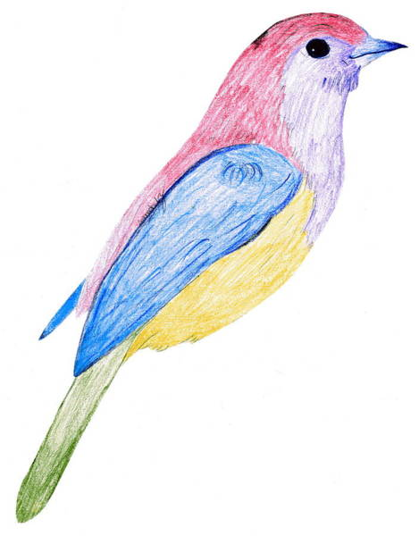 Blue Parrot Drawing - This Bird Came By by Amanda Long