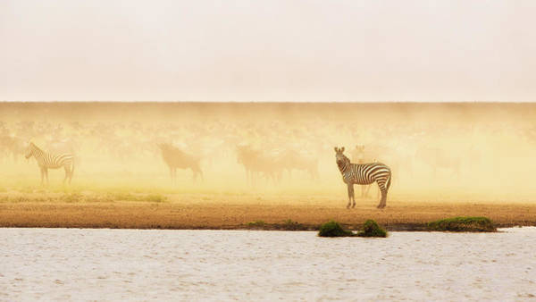 Wall Art - Photograph - This Is Ndutu by Mohammed Alnaser