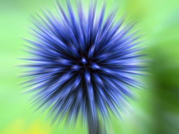 Wall Art - Photograph - Thistle Flower by Clouds Hill Imaging Ltd/science Photo Library