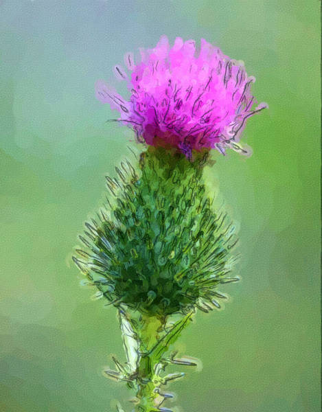Wall Art - Digital Art - Thistle In Bloom by George Ferrell