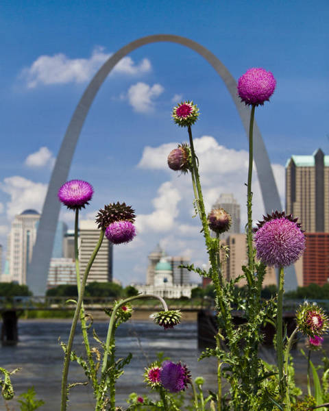 Photograph - Thistles And The Arch by Garry McMichael