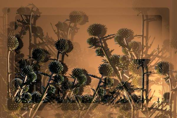 Ncs Digital Art - Thistles by Karin Afshar