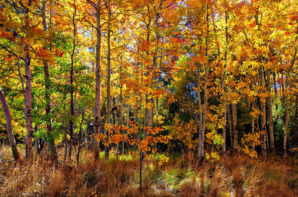 Thomas Creek Fall Color Art Print