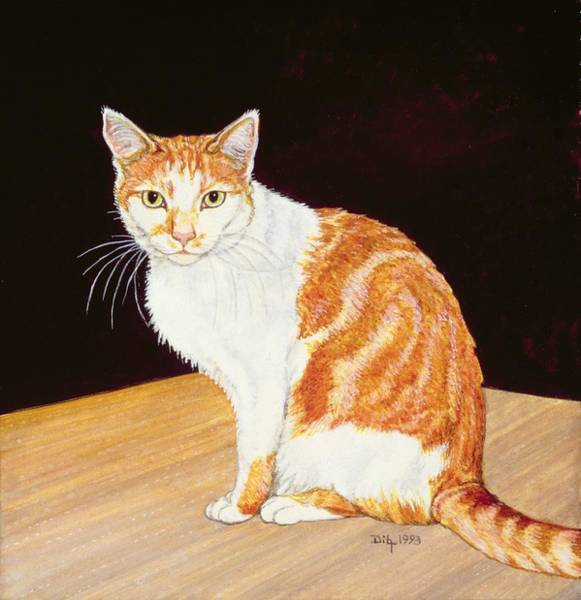 Ginger Cat Photograph - Thomas by Ditz