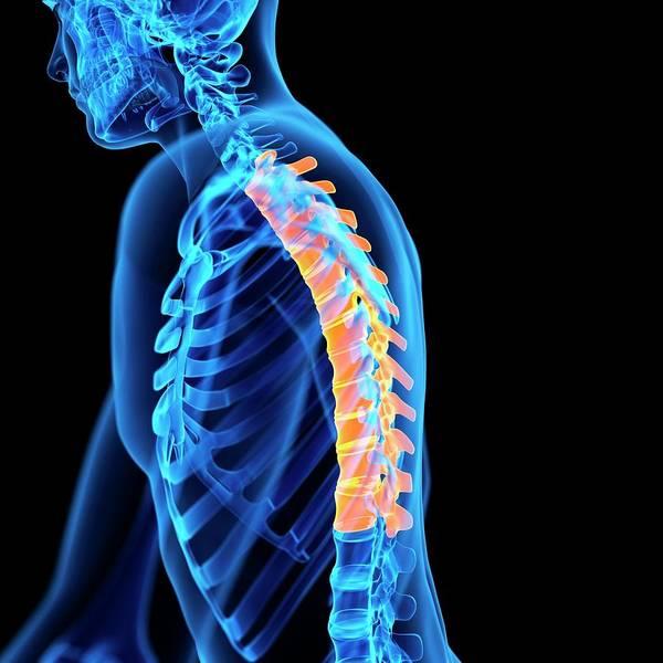 Thoracic Spine Art Print
