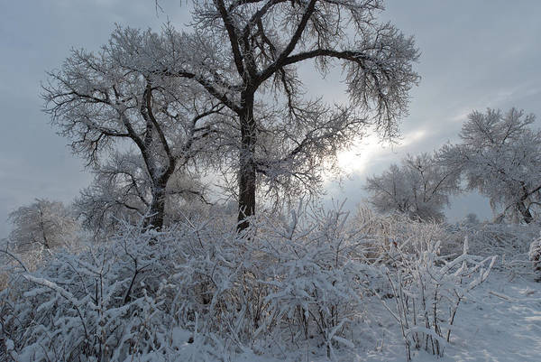Photograph - Thornton Colorado Winter Landscape by Cascade Colors