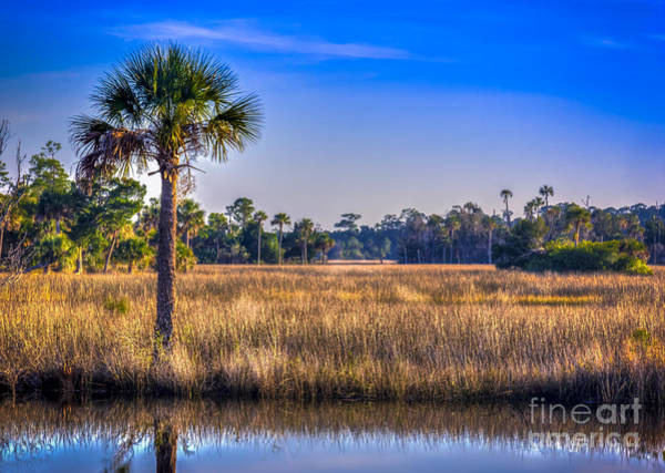 Marshland Photograph - Those Quiet Sounds by Marvin Spates