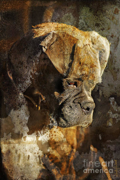 Boxer Wall Art - Digital Art - Thought Process by Judy Wood