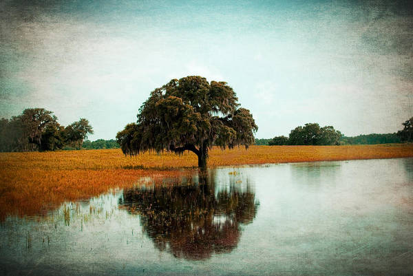 Photograph - Thoughtful Reflection by Beverly Stapleton