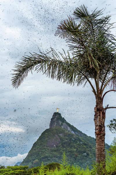 Rio De Janeiro Photograph - Thousands Of Flying Ants On Corcovado by Vitor Marigo