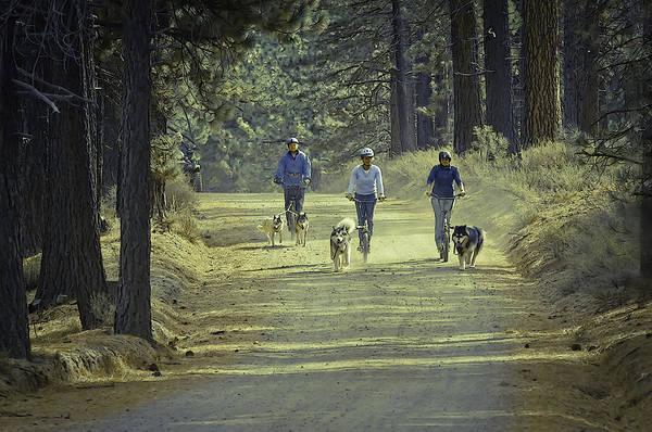 Photograph - Three Amigos by Sherri Meyer