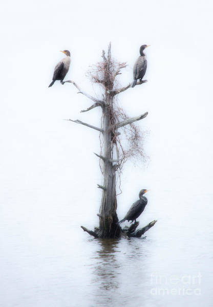 Outer Banks Painting - Three Birds In A Tree - Outer Banks by Dan Carmichael