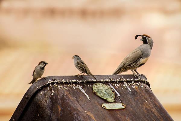 Photograph - Three Birds On An Ore Cart by  Onyonet  Photo Studios