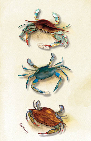 Painting - Three Blue Crabs by Anne Beverley-Stamps