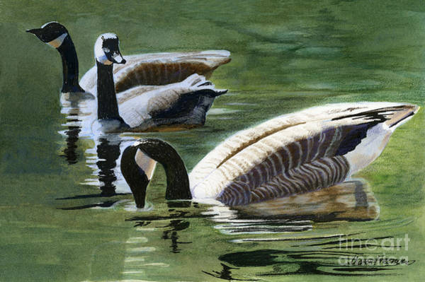 Bird Watercolor Mixed Media - Three Canada Geese by Sharon Freeman