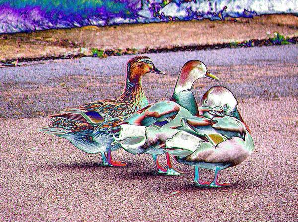 Photograph - Duck-duck-duck by Lora Fisher
