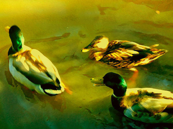 Wall Art - Painting - Three Ducks On Golden Pond by Amy Vangsgard