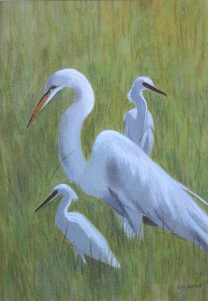 Painting - Three Egrets  by Jill Ciccone Pike