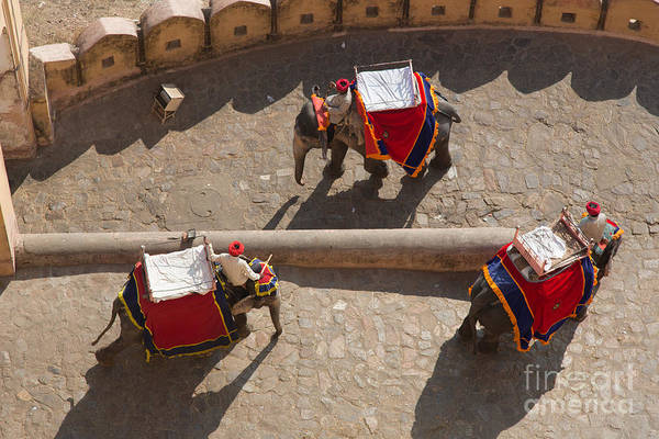 Photograph - Three Elephants At Amber Fort by Inge Johnsson