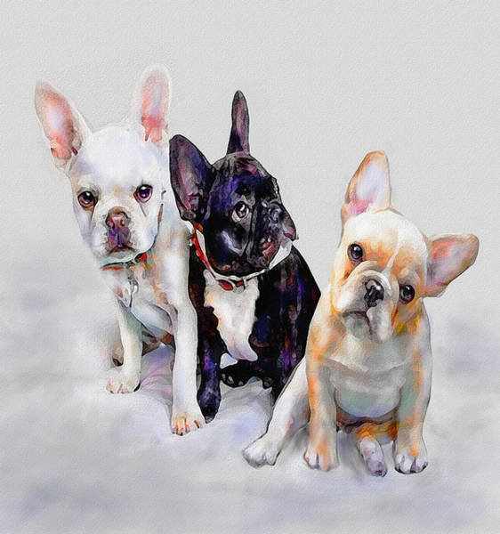 Wall Art - Digital Art - Three Frenchie Puppies by Jane Schnetlage