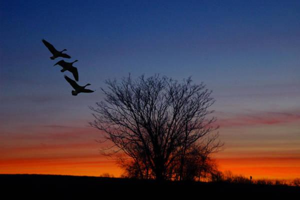 Photograph - Three Geese At Sunset by Raymond Salani III