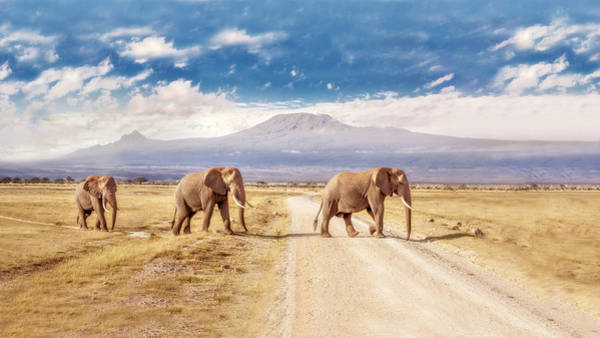 Kilimanjaro Photograph - Three Giants by James Forsyth