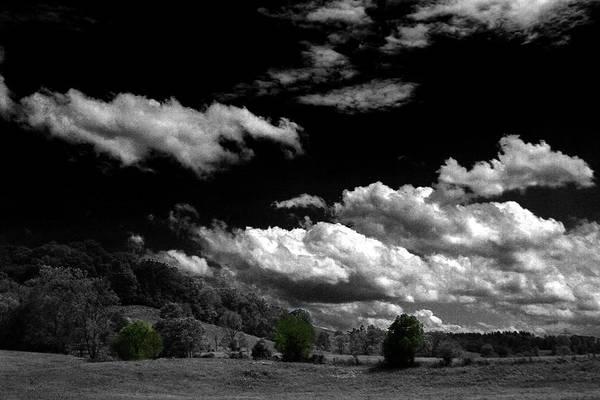 Photograph - Three Green Trees by David Yocum