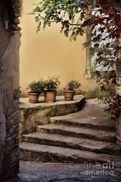 Chateauneuf Photograph - Three Herbs by Anita Miller