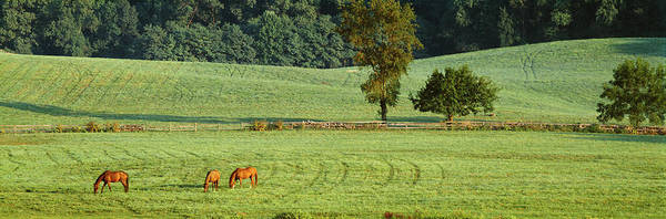 Wall Art - Photograph - Three Horses Grazing In A Field, Tufton by Animal Images